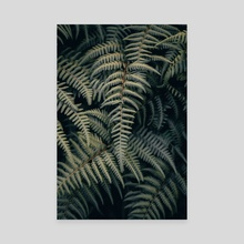 Ferns on Ferns - Canvas by Colby Morris