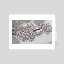 cherry blossoms  - Art Card by Amanda Swank