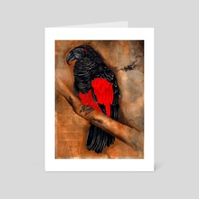 Pesquet's Parrot - Art Card by Fraser Wright