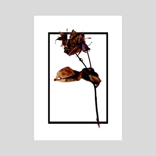 Old Flower by Mattia Liberati