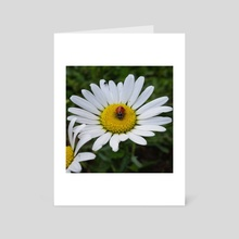 Daisy Bug - Art Card by Ashley Gedz