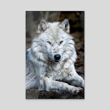 White Wolf - Acrylic by Ernie Basciano