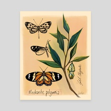 Spotted Tiger butterfly  - Canvas by Jarhn Manning