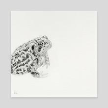 Anaxyrus baxteri - Canvas by Kim de Haan