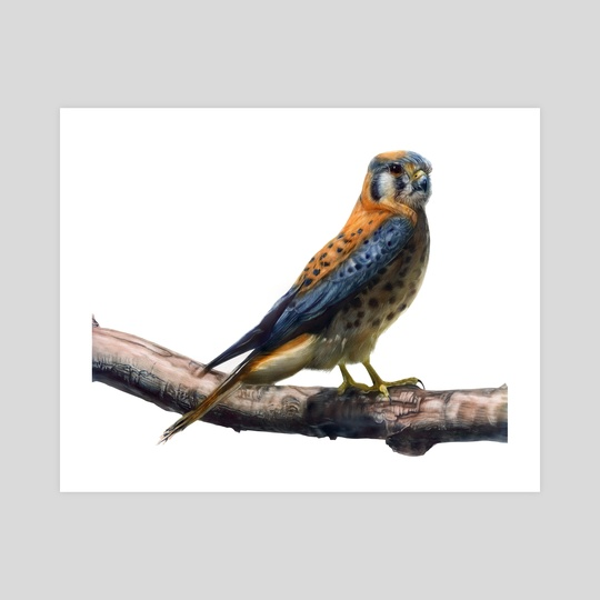 American kestrel by Leeah Whittier