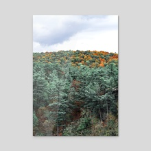 The Forest-Fall Colors in Minnesota-Landscape Photography - Acrylic by Anthony Londer