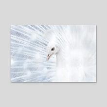 Albino Peacock - Acrylic by David Celli