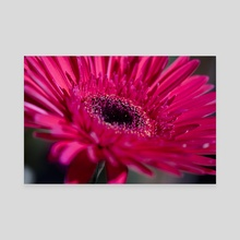 Magenta Flower - Canvas by Eye Spy Nature