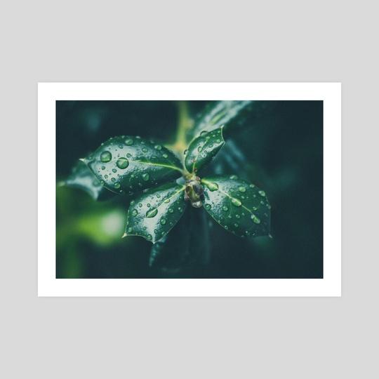 Droplets by Kristin Elsen