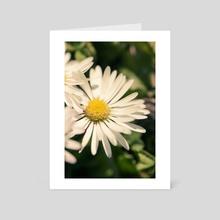 Daises - Art Card by Chiara Cattaruzzi