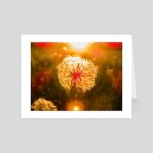 Dandelion at sunset - Art Card by Gvardian Gyula