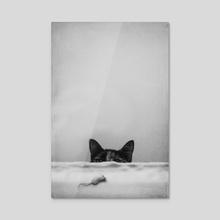 Slinky Cat - Acrylic by Cvetelina Yurukova
