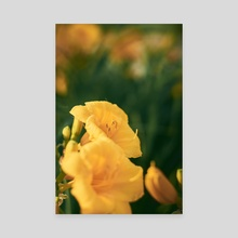 Yellow Day Lilies 2 - Canvas by Mahir Sufian