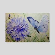 Holly Blue Butterfly - Canvas by Amanda Monk
