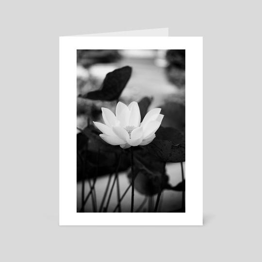 White lotus in the King garden by Nam Quach