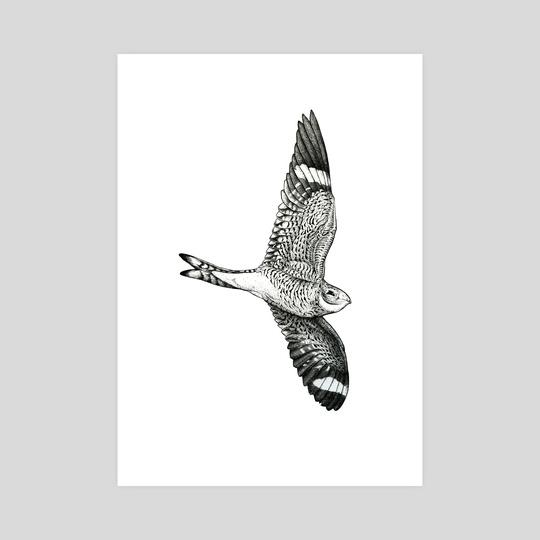 Common Nighthawk by Ian Sullivan Cant