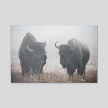 Bisons in Yellowstone National Park - Acrylic by Monika Lis