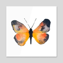 Watercolor & Ink Butterfly #6 - Acrylic by Jannah Lyon