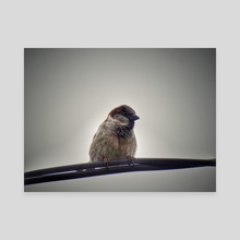 Sparrow perched - Canvas by Vlad Stroe