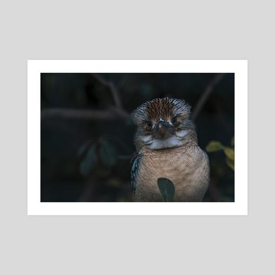 Blue Winged Kookaburra by Io Kalogiannakou