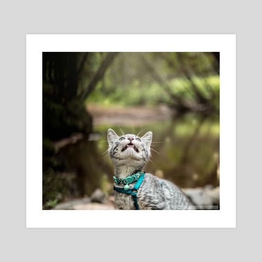 I am kitty! by Kimberly AF