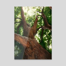 Family Series: Climbing Tree - Acrylic by BDJ