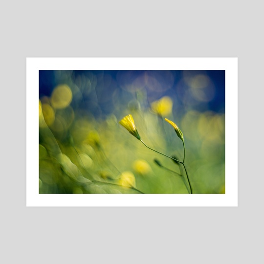 Yellow Flowers II by Angel Yanev