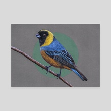 Golden-collared tanager - Canvas by Mikhail Vedernikov
