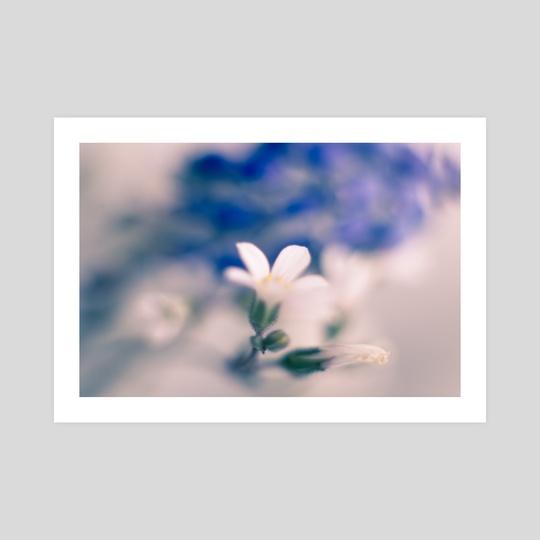 White and Blue by Joana Lourenco