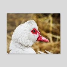 Cute duck - Acrylic by Vadim Fomin