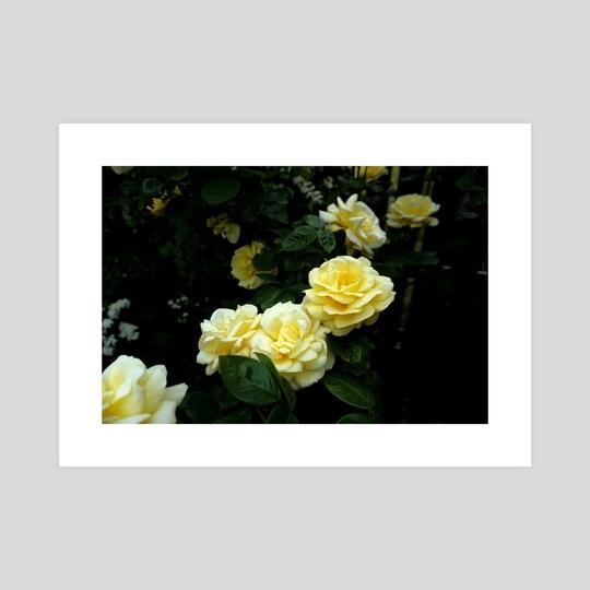 roses in the dark by Bekka