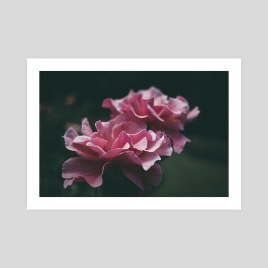Pink Ladies by Kristin Elsen