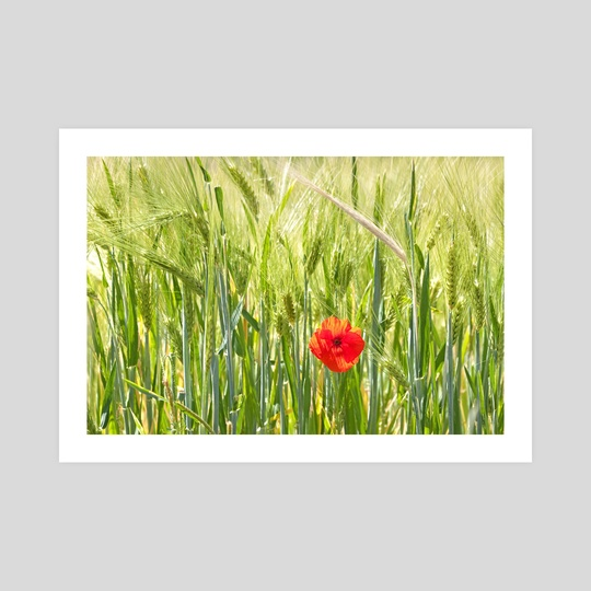 Poppy by Marvin Diehl