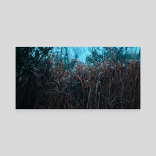 In The Reeds_cinema - Canvas by Darryl Friemann