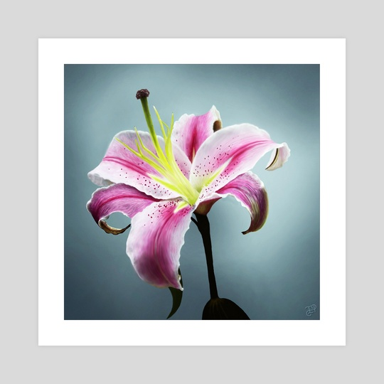 Pink Lily Flower by WickedIllusion