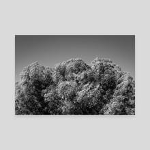 Spinning Juniper - Canvas by Beau Devereaux