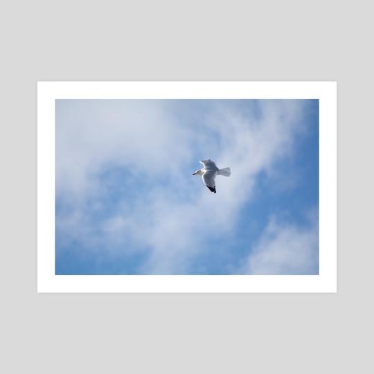 .:Clouded Flight:. by Kayla Wolf