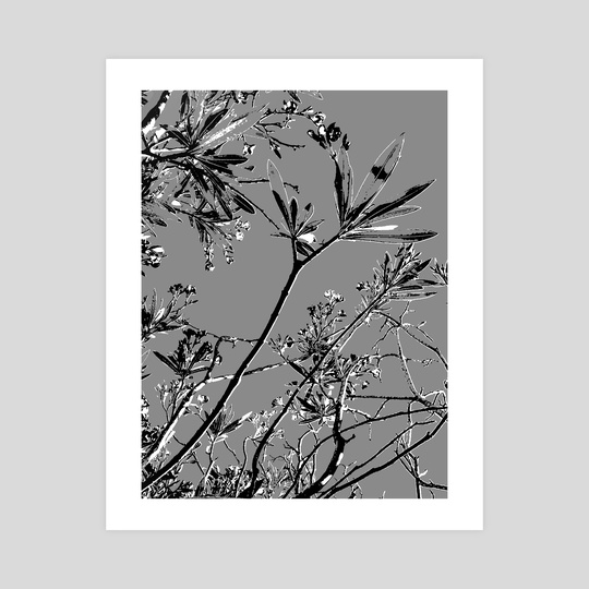 Grey Colors Botanic Illustration by Daniel Ferreira Leites