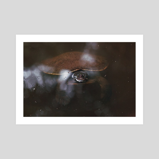 Turtle by AJ S