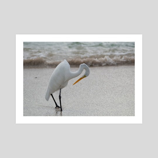 Long-Legged Beachwalker by Ollie Levy