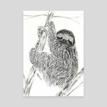 Sloth - Canvas by Patricia  Moore
