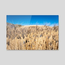 As the Golden Grasses Glow in Maragua Crater - Acrylic by Namchetolukla