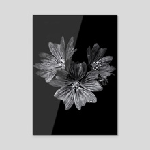 Backyard Flowers In Black And White 11 - Acrylic by Brian Carson