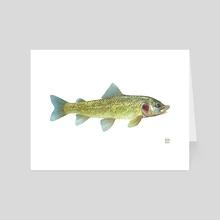 Whitefish - Art Card by Eric VanAllen