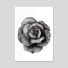 Dark Rose - Acrylic by Nika Akin