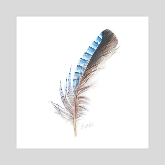 Blue Feather Drawing by Emmy Kalia