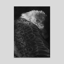 Bald Eagle - Canvas by WickedIllusion