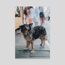 venice print - puppy - Canvas by marco gomez