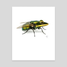 Frog/Fly -  You Are What You Eat - Canvas by Sarah DeRemer