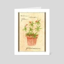 Planimarium - Anserini galium odoratum - Art Card by Planimarium Art